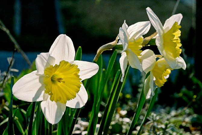 The 9th annual Bulb Give Away Day is set for Saturday, Oct. 1 at the Westcott Community Center.