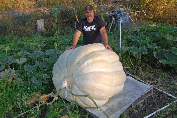THE GREAT PUMPKIN - Randy Strombeck of West Chazy stands behind a giant pumpkin he is growing in his backyard on Slosson Road. The pumpkin currently weighs approximately 1,002 pounds and will be entered in a competition in Vermont Oct. 8.