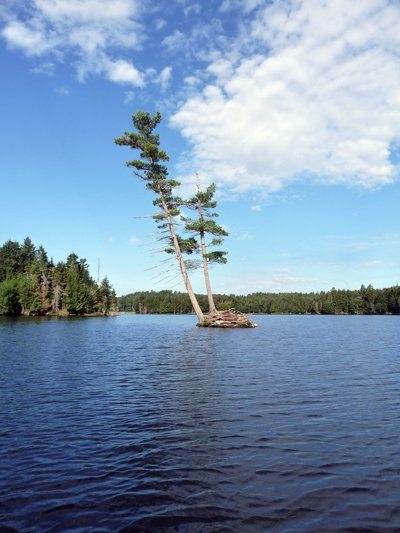 A huge, lone pine, which has managed to maintain a presence atop a rocky outcrop, in the middle of Cranberry Lake, despite the rigors of waves, weather and winter, offers a suitable symbol of the hardiness and stubborn nature of Adirondackers.
