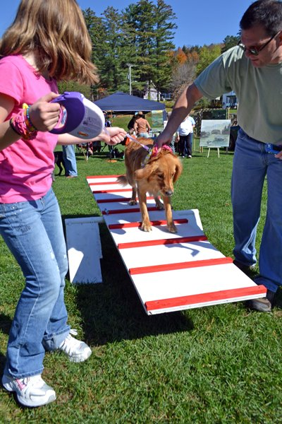 STEADY ON HER PAWS - Calli the retriever tries out the dog obstacle course at Long Lake's Pet Fest Saturday, Oct. 8, guided by Victoria and Andy Castro.