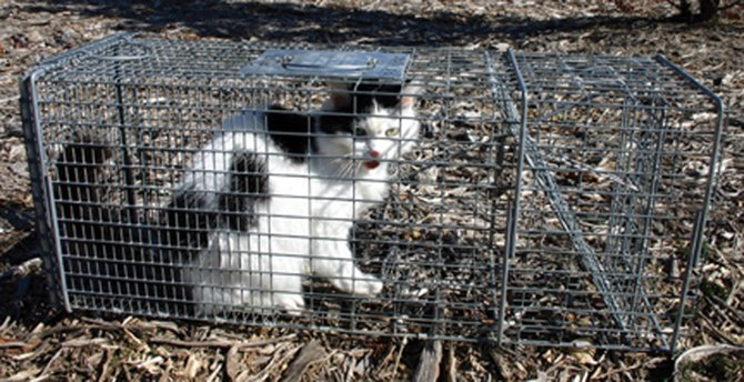 Salina's cat law is being challenged in court by the Animal Alliance of Greater Syracuse as well as two town residents. The plaintiffs charge that the law is unconstitutional.