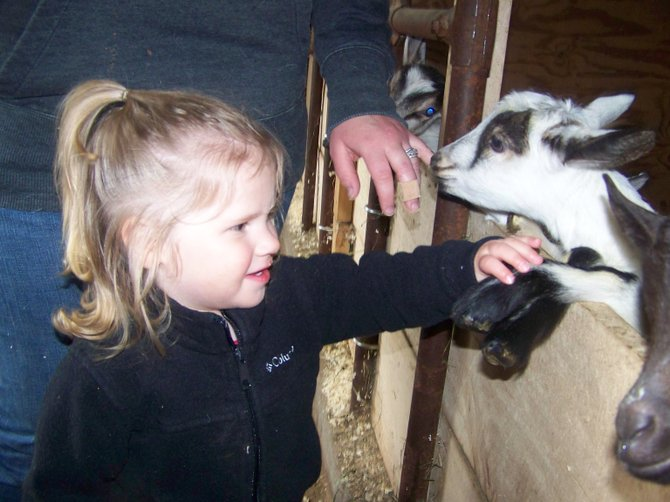 Josie Pennock pets the hoof of a baby goat at Bella Via Farms, which will participate in this Saturday's Farm Fest. Owned by Bella and Kevin Stahl, Bella Via Farms is in its second year of operation.