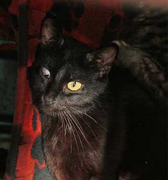 Amethyst - North Country SPCA