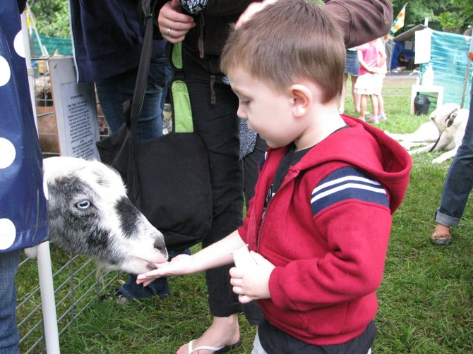Vincent Sinko, 2, of Baldwinsville, holds his hand out to feed the goats in the petting zoo during the Golden Harvest Festival. The zoo animals were provided by Springside Farm, located in Fabius, which brought several animals to the event including dogs, rabbits, potbellied pigs and alpacas.