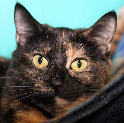 Mindy - North Country SPCA