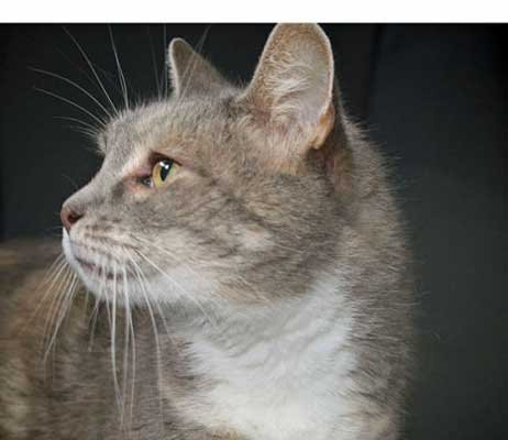 Buddy - North Country SPCA