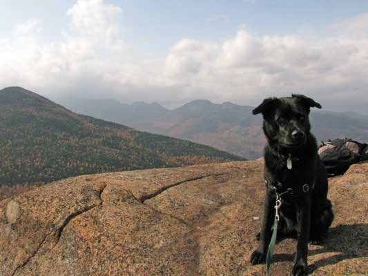 Belle the borador finds it easy to forget life's worries on the summit of Round Mountain.