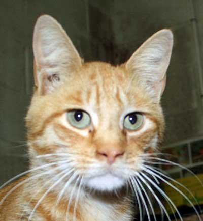Oscar - North Country SPCA