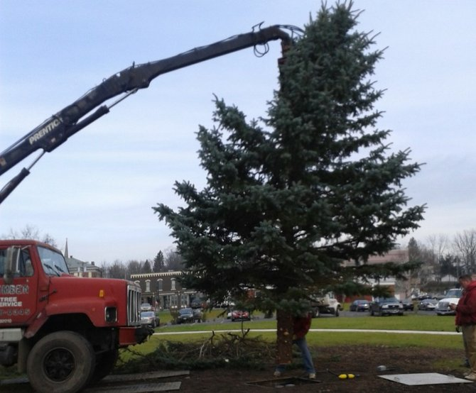 A member of the Timber Tree Service team guides the village's Christmas tree into its stand in Village Square.