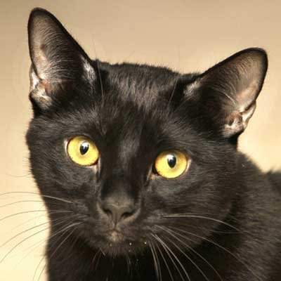 Rambler - North Country SPCA