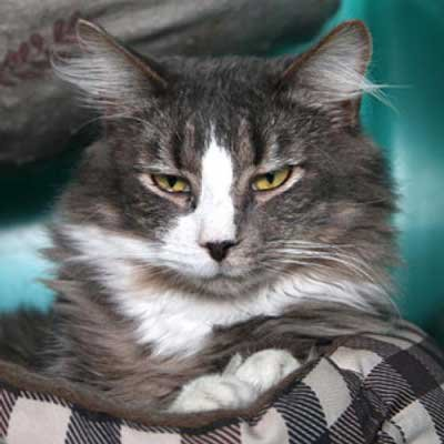 Pete - North Country SPCA
