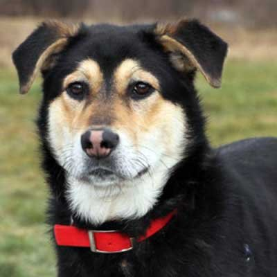 Rooney - North Country SPCA