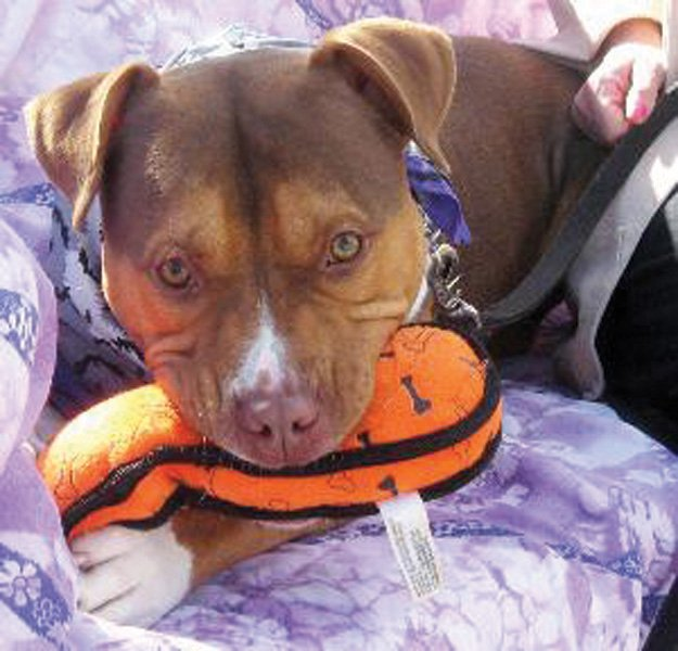 Sarge, this week's CNYSPCA Dog of the Week.