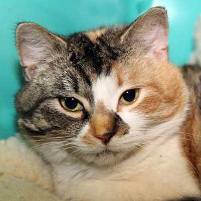 Blossom - North Country SPCA