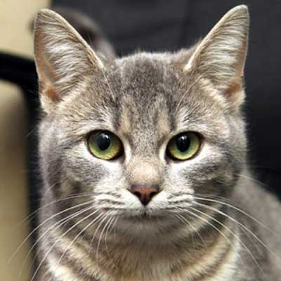 Twinkle - North Country SPCA