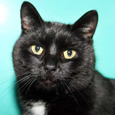 Dee Dee - North Country SPCA