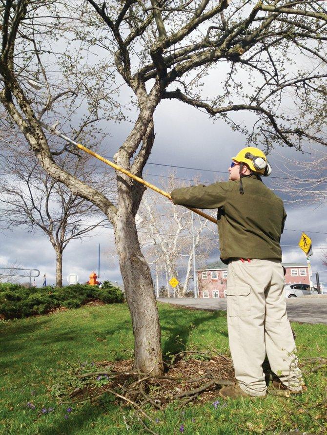 Bartlett Tree Service Arborist Jon Slate prunes a flowering crabapple in Baldwinsville's Canal Park on Saturday, April 20.