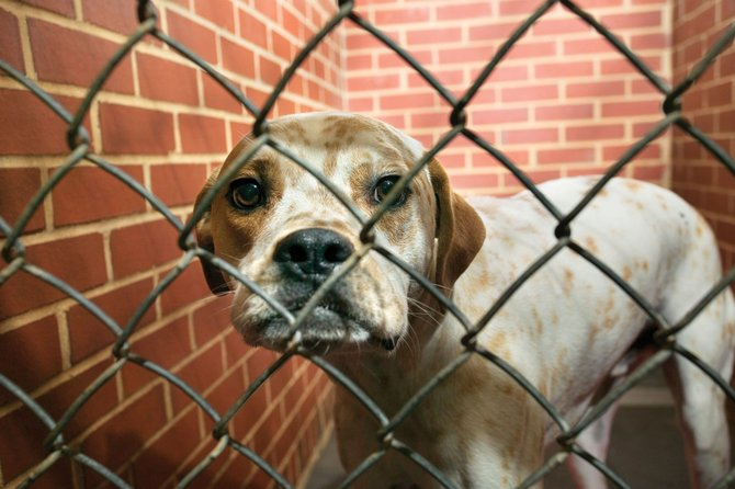 Animal advocates in Central New York are calling for harsher penalties for those who abuse or neglect animals, including jail time and an animal abuser registry, after a dog was left to die in a hot car at the New York State Fair earlier this month.