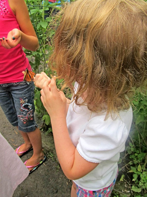 Butterflies interact with visitors at Guilderland's Farnsworth Middle School.
