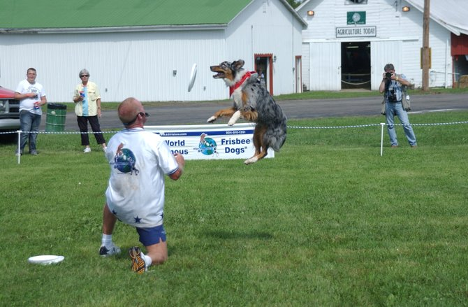 Lucky leaps to catch a frisbee during the Disc-Connected K9s show at the Altamont Fair. It&#39;s but one of the attractions at the fair, which runs through Sunday, Aug. 21.