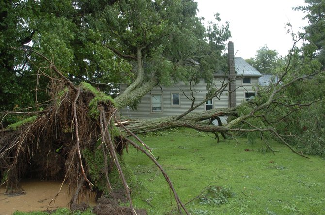 A very large Locust tree attempted to join Frank Orlop in his kitchen on Sunday, during Tropical Storm Irene. His Round Lake Rd home suffered minor damage due to the huge root ball slowing the fall of the tree.