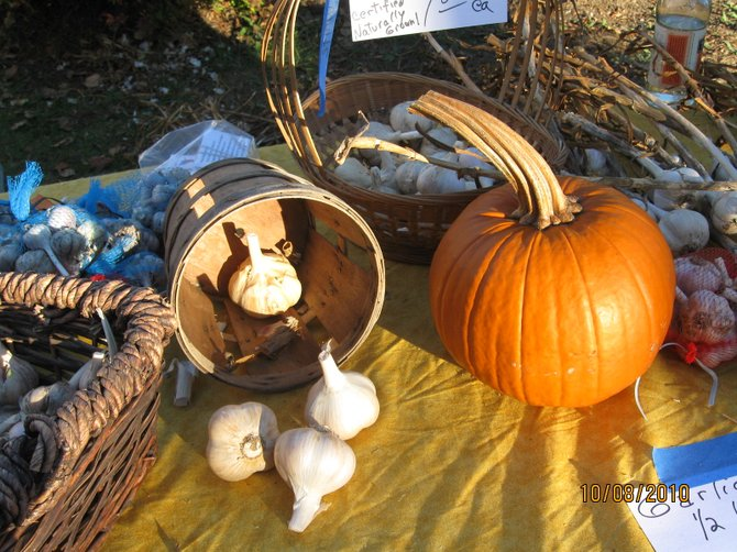 Both garlic and the fall harvest will be celebrated 3 to 6 p.m. Friday Oct. 7 as the Warrensburg Riverfront Farmers Market holds its annual Garlic Festival. The event not only features savory varieties for purchase, but also handouts detailing growing tips and recipes, as well as musical entertainment — all in a historic riverside setting.