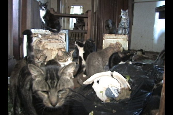 Cats living inside neglected conditions at the home of Rotterdam resident Michelle Regels were removed by Schenectady County SPCA on Thursday, Oct. 6.