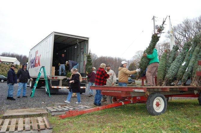 Volunteers load Christmas trees into a FedEx truck at Three B Tree Nursery, Jordan.