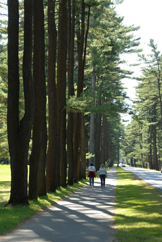 The variety and offerings at our state's parks and historic sites are many. Here's a nice shot of the Avenue of the Pines at Saratoga Spa State Park. Get out and show the parks some love on May 5 by volunteering for I Love My Park Day. Photo Submitted.