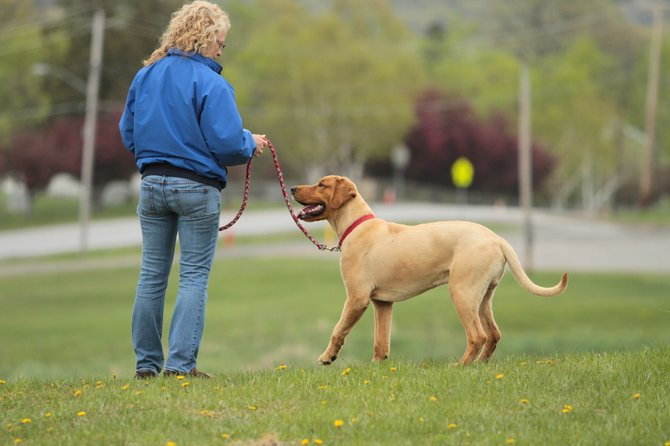 Spring weather has encouraged many Ticonderoga residents to begin walking. They've found dog feces throughout the community.