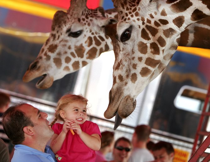 This year's Hollywood Circus attraction in the Big Top of the Altamont Fair will feature a large petting zoo with giraffes.