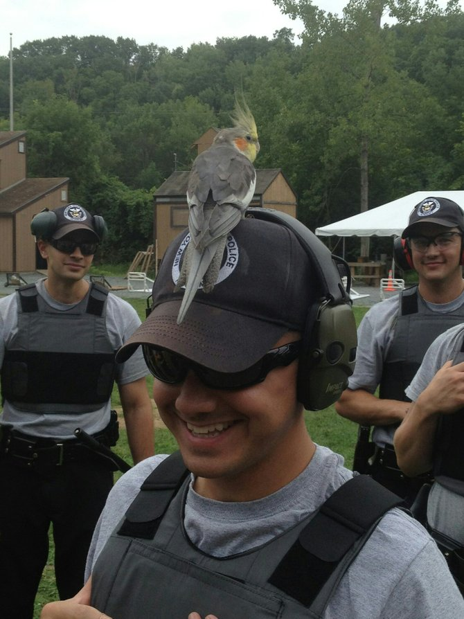 Lost cockatiel befriends state police academy recruit during training in Guilderland.