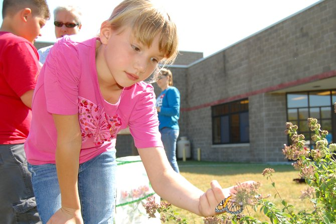 Willsboro Central School third-grader Kaili Bourdeau helps release butterflies as part of a project in Lorilee Sheehan's classroom.