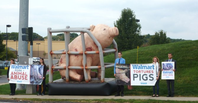 The national animal rights organization Mercy for Animals held an hour-long demonstration at the Glenmont Walmart on Wednesday, Sept. 26. They were protesting the alleged abuse of pigs by Walmart pork suppliers.