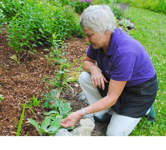 The University of Vermont (UVM) Extension Master Gardener Program can help you expand your gardening knowledge through its comprehensive 13-week home horticulture course starting Feb. 5. Pictured: Vermont Master Gardener Marijke Niles of Starksboro.