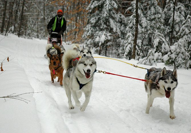 A major event planned for Schroon Lake this winter has been cancelled. Dog sled races scheduled for Feb. 9 and 10 will not be held.