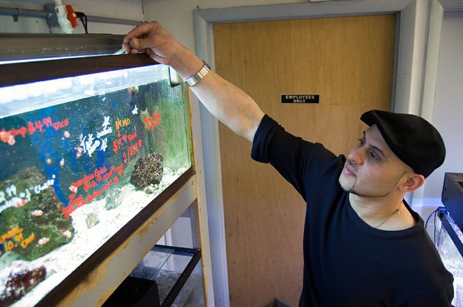 David DeLugo, the new owner of Union Aquarium, feeds clownfish in the store's saltwater section of tanks. Paul Sartoris, founder of the store, sold it to DeLugo, who was an employee for 10 years.