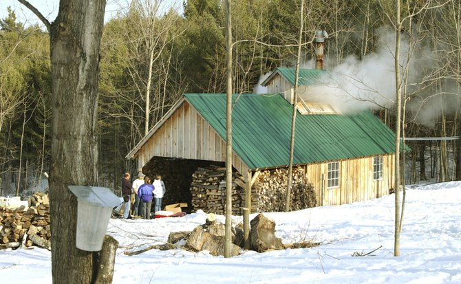 On Feb. 27, Gov. Peter Shumlin (D) will tap a sugar maple tree on the lawn of the Vermont State House, celebrating the start of the maple sugaring season in Vermont. Photo courtesy of the Vermont Maple Sugar Makers' Association