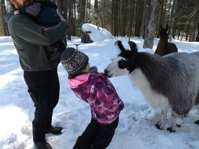A child visiting Irv West's Peru Llama Farm in Thurman reacts to a llama's attempts to get acquainted. The llama farm will be holding an open house this weekend and next from 10 a.m. to 4 p.m. on both Saturday and Sunday.