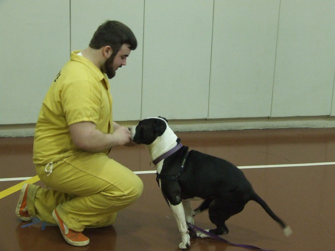 Inmates at the Albany County Correctional Facility train dogs to help increase adoption rates at the Mohawk Hudson Humane Society animal shelter in Menands.