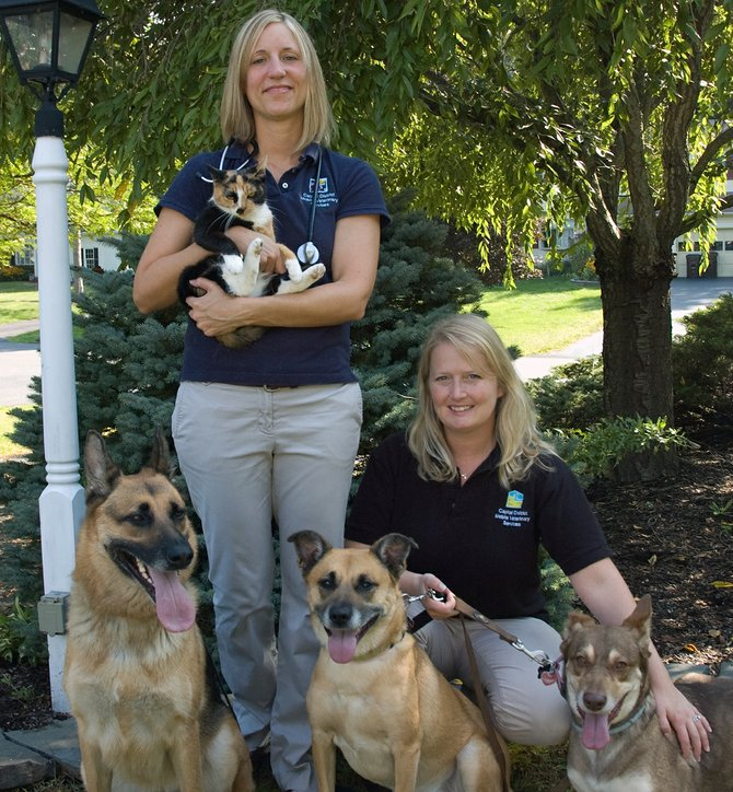 Capital District Mobile Veterinary Services Owner Sarah Nolan, standing, and veterinary assistant Anne Giagni recently started making house calls to see dogs and cats.