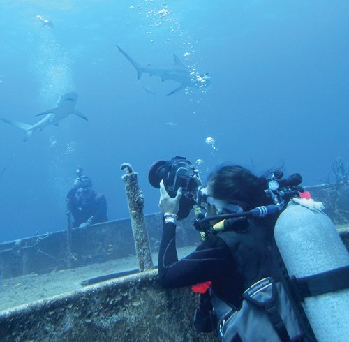 """Cazenovia teen Meerae Firkins, a sophomore at Cazenovia High School, takes pictures of Caribbean reef sharks during a shark dive on a recent """"live-aboard"""" diving excursion she took with her mother in the Bahamas."""