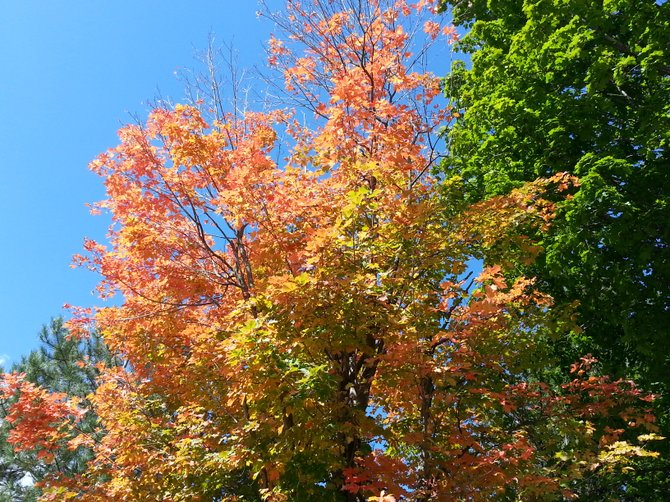 Fall's foliage is in full force in the Capital District.