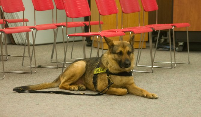 """Guilderland School Central District is looking to introduce K9 search dog """"Rocky"""" into school buildings to perform random drug and weapon sweeps periodically."""