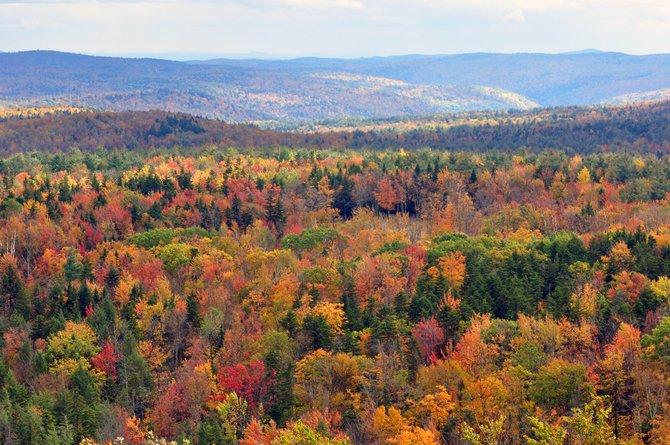 Vermont Woodlands