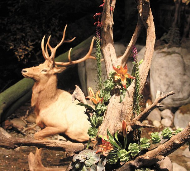 Craig Waltz Jr. of Fleurelite Floral Design created this arrangement for the Adirondack Wilderness display at the state museum.