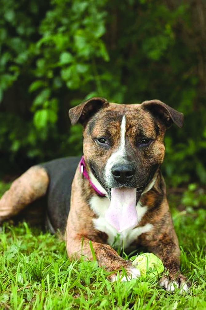 Call the CNYSPCA at 454-4479 to find out more about adopting Cody the canine cutie!